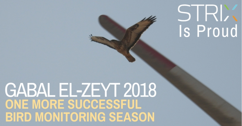 One more successful bird monitoring season in Egypt