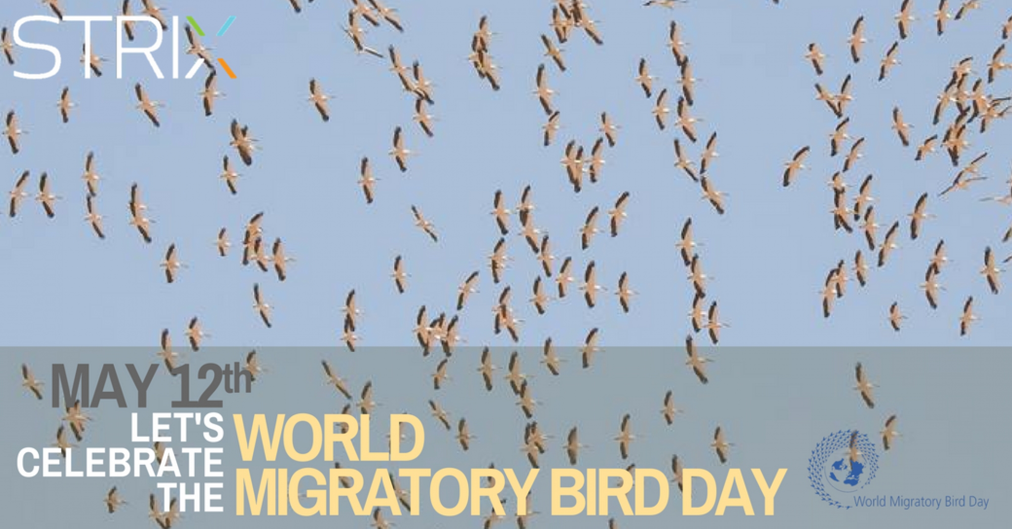 Let's Celebrate the World Migratory Bird Day